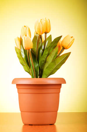 Bunch of tulip flowers on the table Stock Photo - 7597451