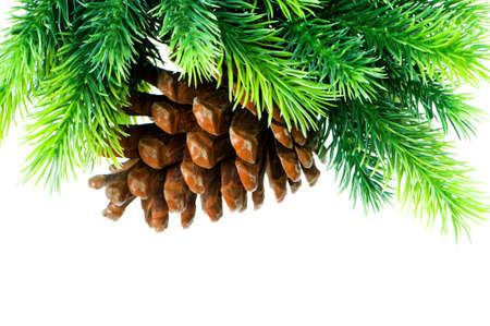 Cone and christmas tree isolated on white Stock Photo - 7634301