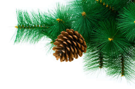 coniferous tree: Christmas tree isolated on the white background
