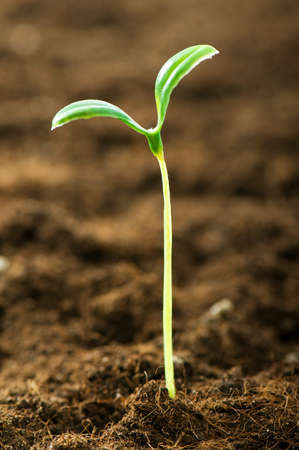 Green seedling illustrating concept of new life Stock Photo - 7664481
