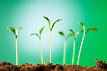 Plántula verde que ilustran el concepto de vida nueva