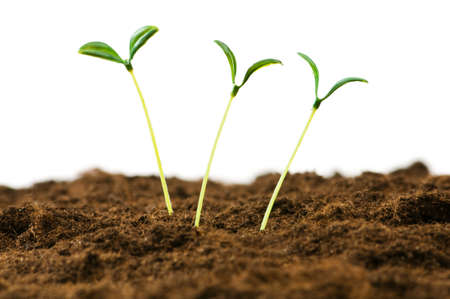 Green seedling illustrating concept of new life Stock Photo - 7813850