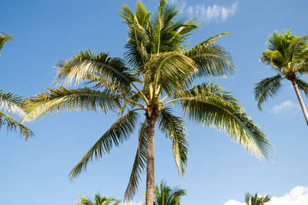 Palms trees on the beach during bright day Stock Photo - 7915304
