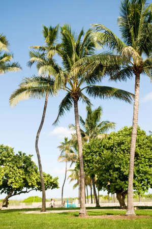 Palms trees on the beach during bright day Stock Photo - 7915346