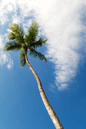 Palms trees on the beach during bright day Stock Photo - 7915145