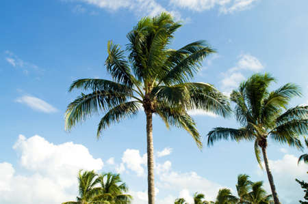 Palms trees on the beach during bright day Stock Photo - 7915261