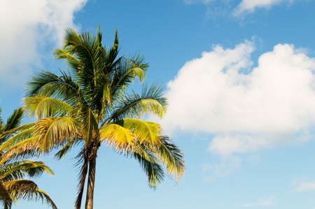 Palms trees on the beach during bright day Stock Photo - 7915241
