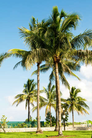Palms trees on the beach during bright day Stock Photo - 8028175