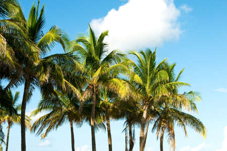 Palms trees on the beach during bright day Stock Photo - 8028168
