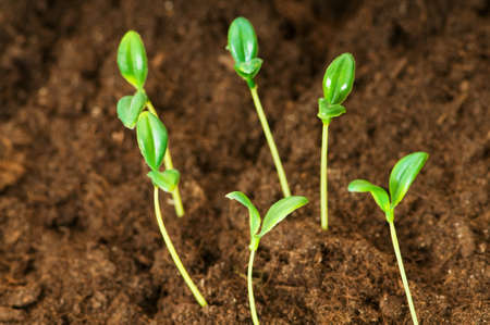 Green seedling illustrating concept of new life Stock Photo - 8059706