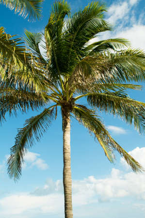 Palms trees on the beach during bright day Stock Photo - 8232964
