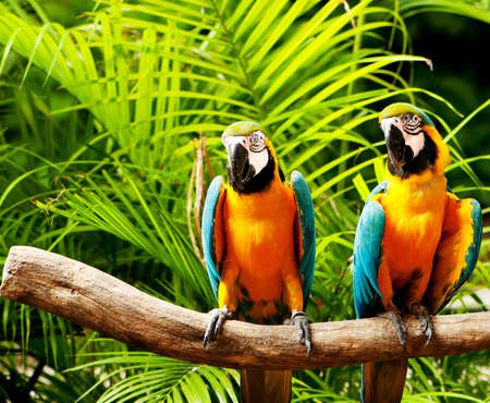 parrot: Kleurrijke parrot vogel zittend op de baars  Stockfoto