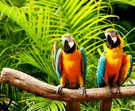 pappagallo: Uccello variopinto pappagallo seduto sulla pertica
