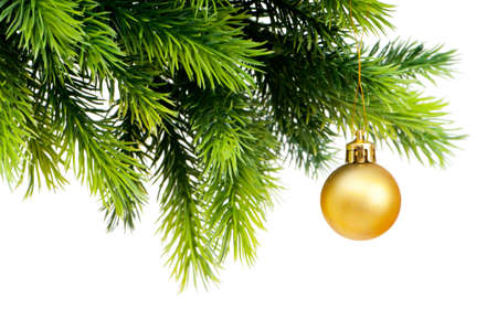 pine trees: Christmas decoration isolated on the white background