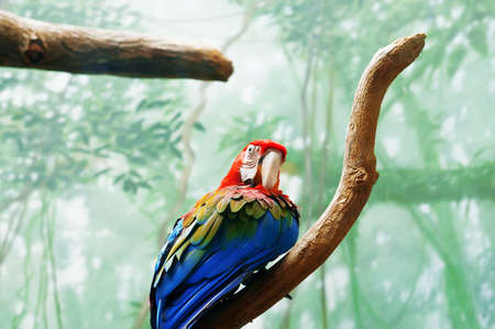 Colourful parrot bird sitting on the perch Stock Photo - 8400513