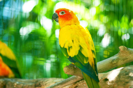 Colourful parrot bird sitting on the perch Stock Photo - 8400400