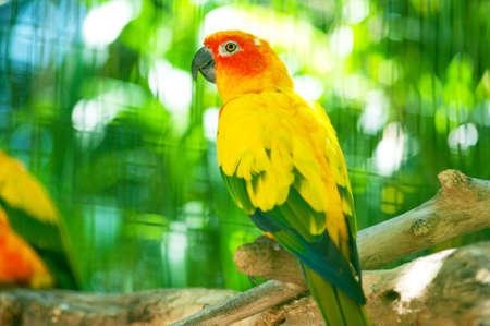 guacamayo: Loro coloridas aves sentado en la percha  Foto de archivo