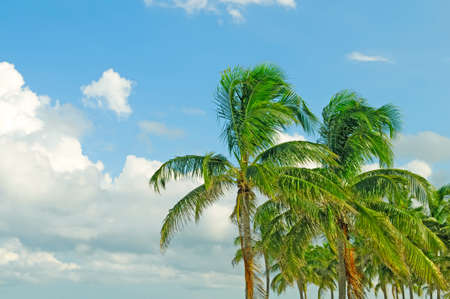 Palms trees on the beach during bright day Stock Photo - 8460133
