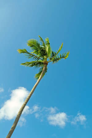 Palms trees on the beach during bright day Stock Photo - 8460007