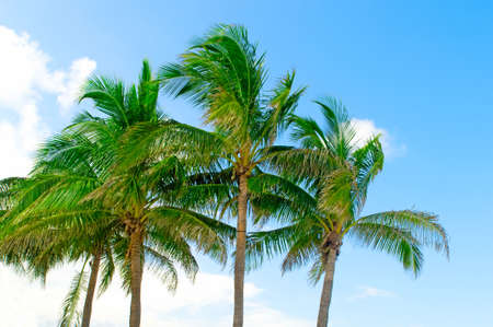 Palms trees on the beach during bright day Stock Photo - 8615443