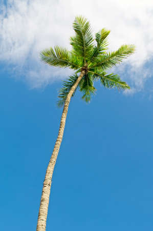 Palms trees on the beach during bright day Stock Photo - 8616483