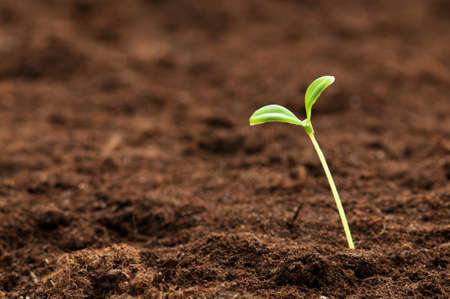 Green seedling illustrating concept of new life Stock Photo - 8616134