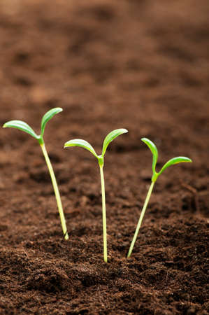 Green seedling illustrating concept of new life Stock Photo - 8615955