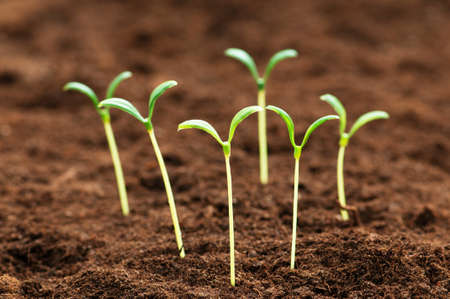 organic concept: Green seedling illustrating concept of new life