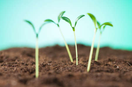 Green seedling illustrating concept of new life Stock Photo - 8614866