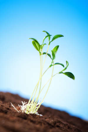 Green seedling illustrating concept of new life Stock Photo - 8615030