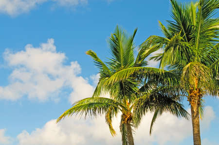 Palms trees on the beach during bright day Stock Photo - 8657020