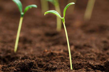 Green seedling illustrating concept of new life Stock Photo - 8657205