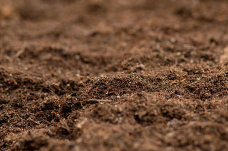 Close up of soil - can be used as background Stock Photo - 8657022
