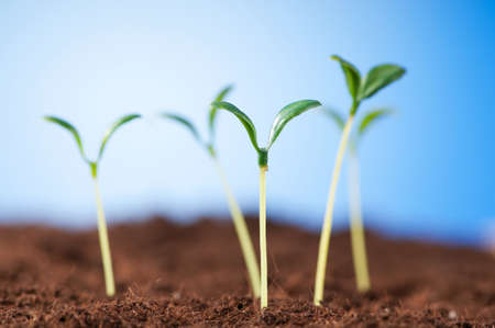 Green seedling illustrating concept of new life Stock Photo - 8657338