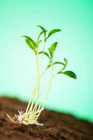 Green seedling illustrating concept of new life Stock Photo - 8657155