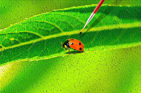 canvass: Lady bug sobre el lienzo de dibujo