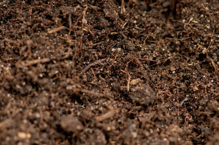 Close up of soil - can be used as background Stock Photo - 8741652