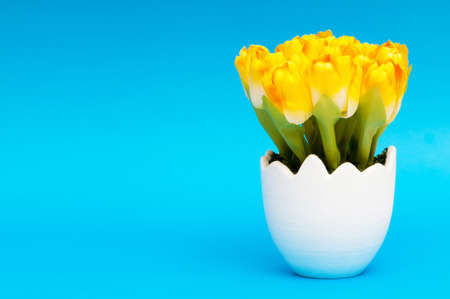 Colorful tulip flowers in the white pot photo