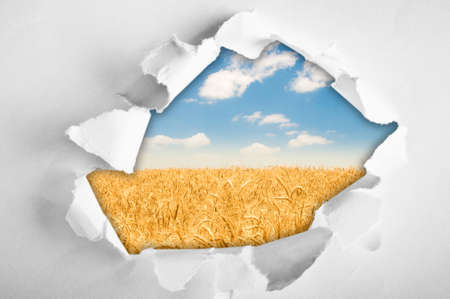 Wheat field through hole in paper Stock Photo - 8943725