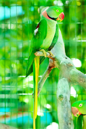 Colourful parrot bird sitting on the perch  photo
