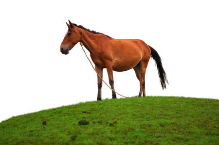 Brown horse on the grass field photo