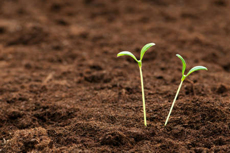seed growing: Green seedling illustrating concept of new life