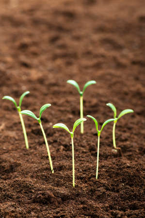 Green seedling illustrating concept of new life Stock Photo - 8943566