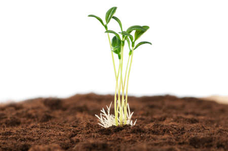 Green seedling illustrating concept of new life Stock Photo - 8943874
