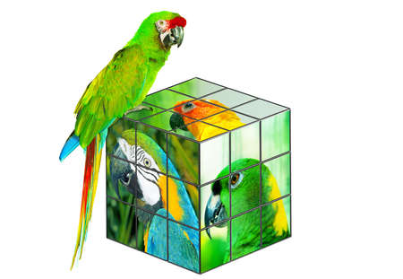 Parrot sitting on the cube photo