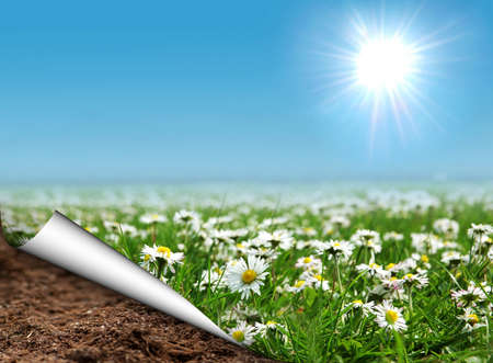 Daisies field with curled page Stock Photo - 8942794