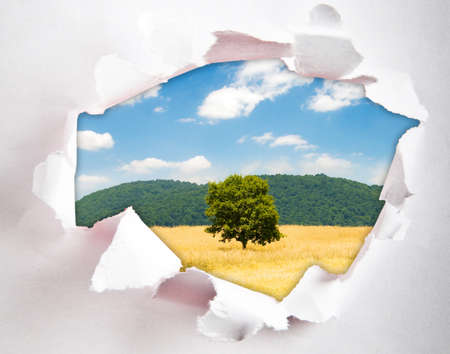 Lonely tree through hole in paper photo