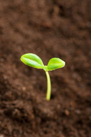Green seedling illustrating concept of new life Stock Photo - 8943400