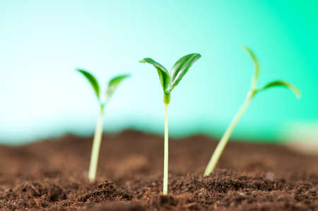 plant growing: Green seedling illustrating concept of new life