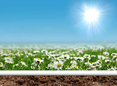 Daisies field with curled page photo